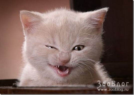 1208738084_funny-cats-01