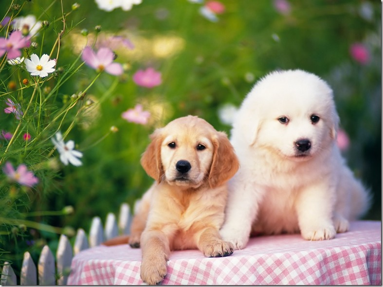 animal_dog-baby--02_05-1600x1200